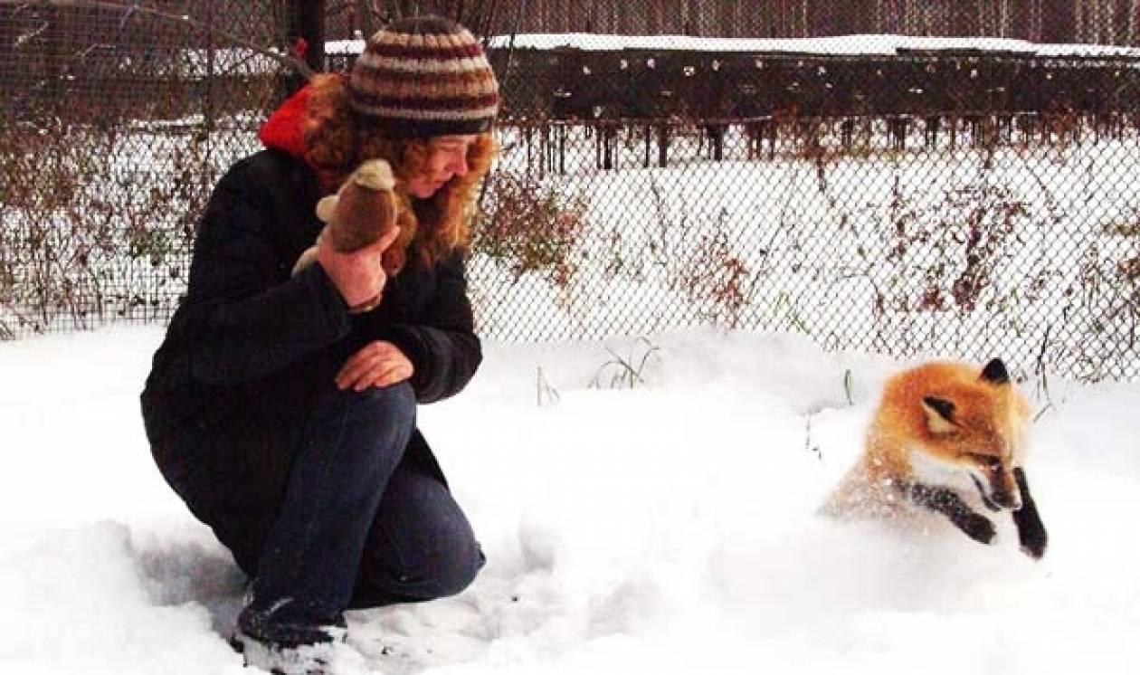 Απίστευτο! Μία αλεπού που συμπεριφέρεται σαν σκύλος