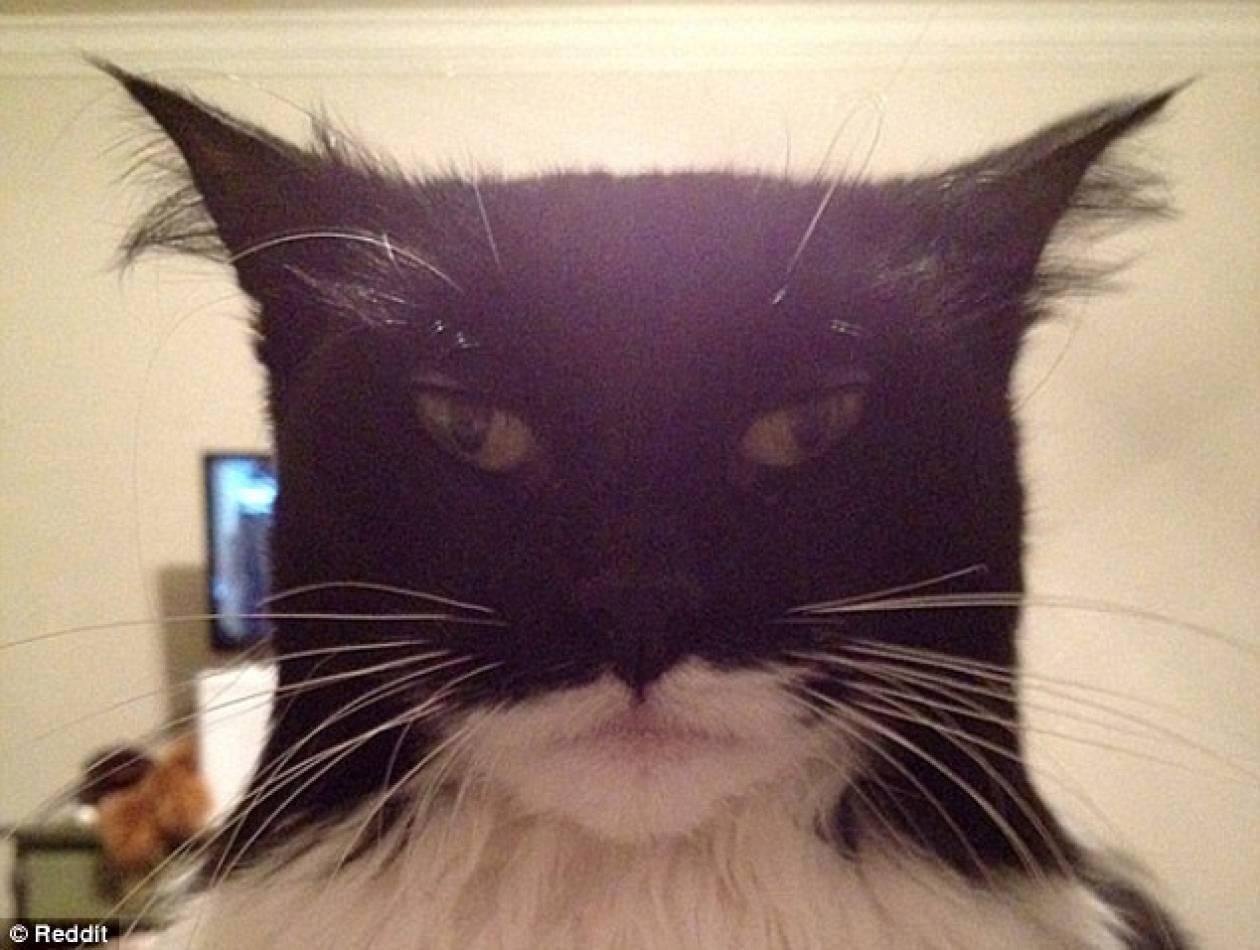 Ο αντίπαλος του Batman βρέθηκε. Έρχεται ο... Catman! (pic)