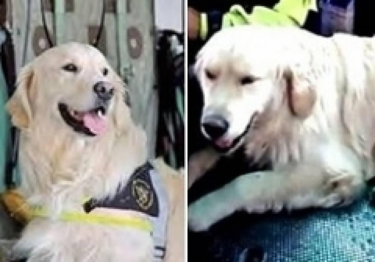 Τραγικό: Έπεσε από γκρεμό το σκυλί-διασώστης του σεισμού στην Άκουιλα