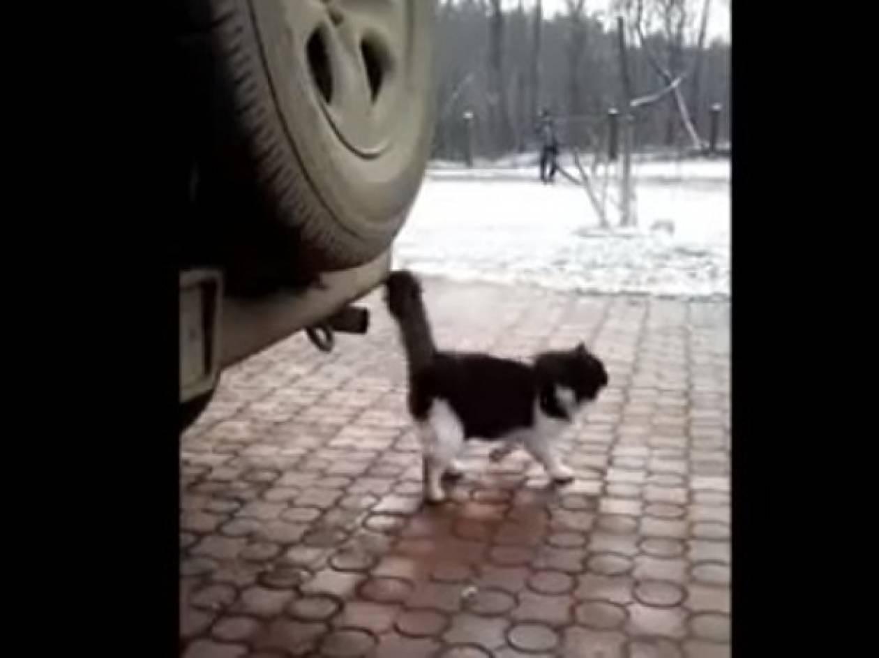 Βίντεο: Δεν είναι με τα καλά της η γάτα...