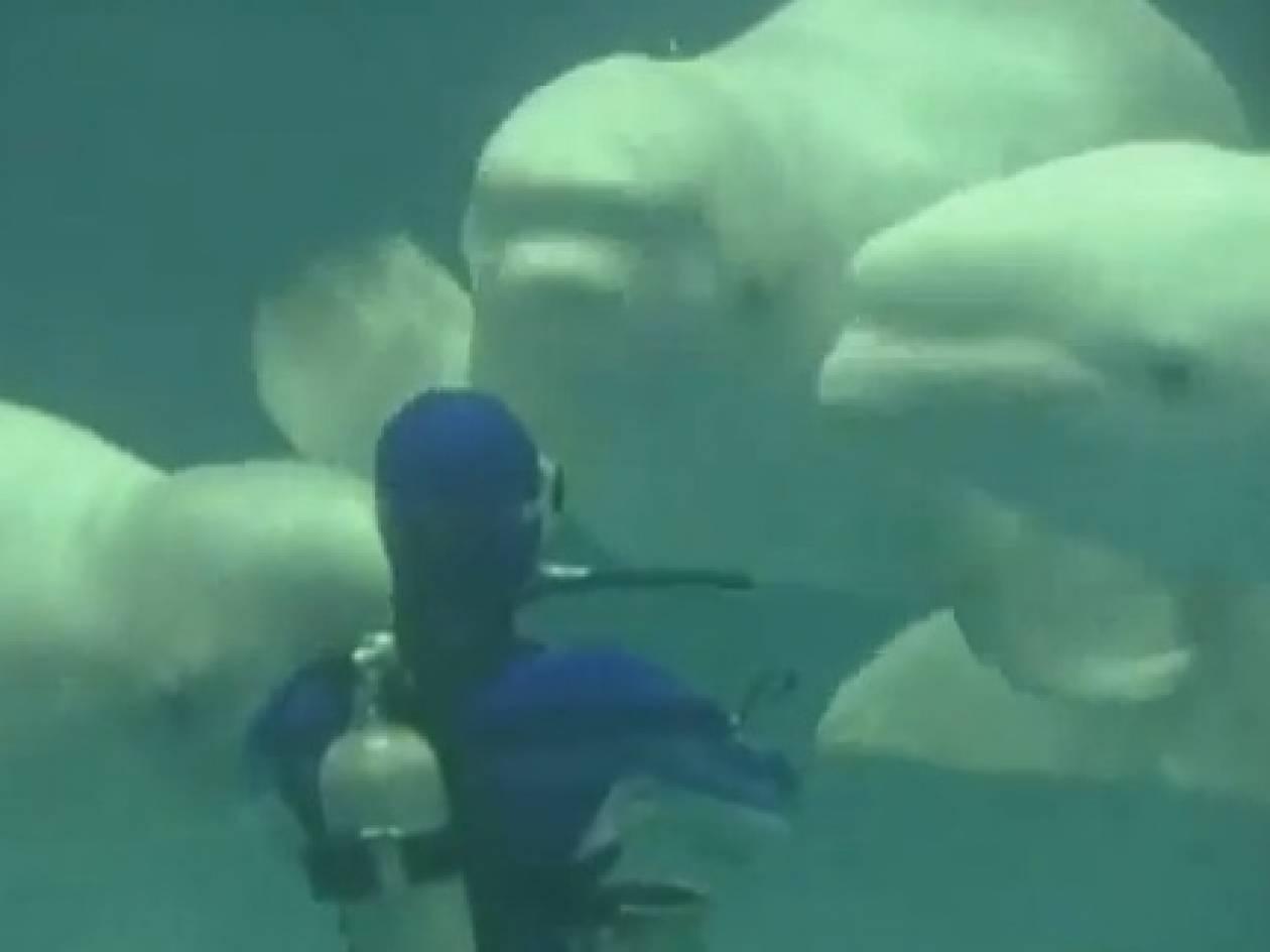Φανταστικό: Δελφίνια εν δράσει...(βίντεο)