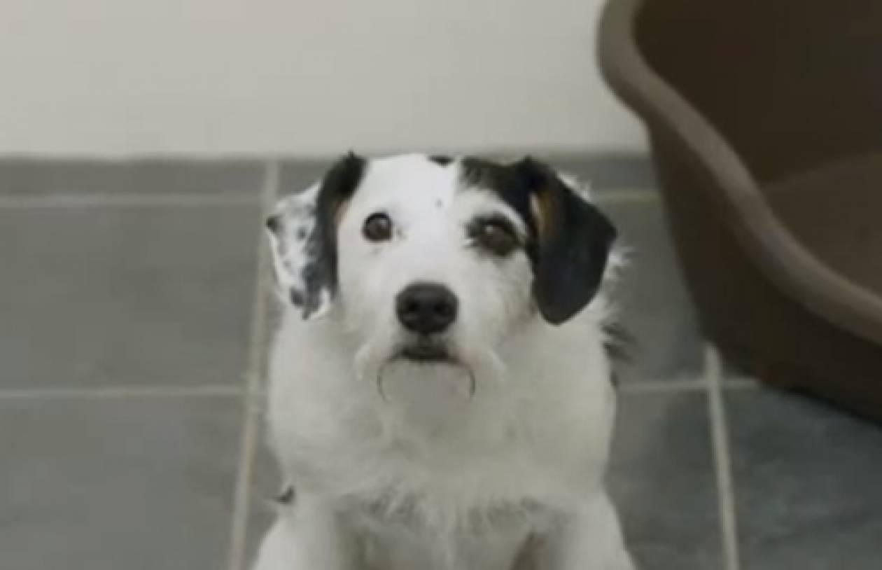 Ο σκύλος...πολυμηχάνημα! (βίντεο)