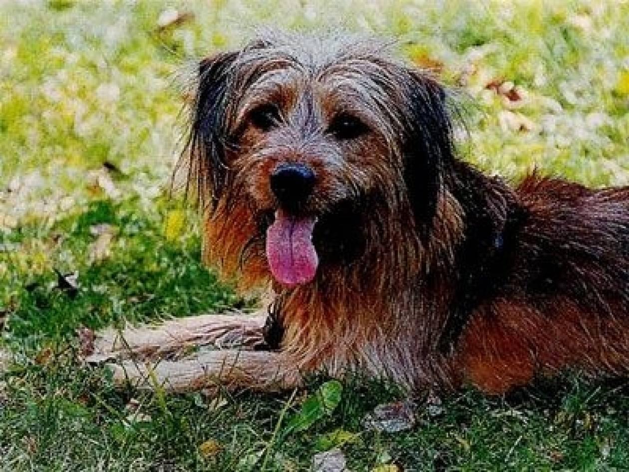 Υποψήφιος δημοτικός σύμβουλος... ένας γλυκύτατος σκύλος!