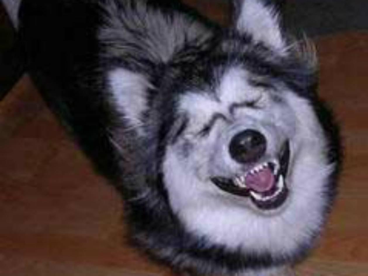 ΕΠΙΚΟ: Έχετε δει Husky να κάνει Photobombing; Ήρθε η ώρα! (pic)