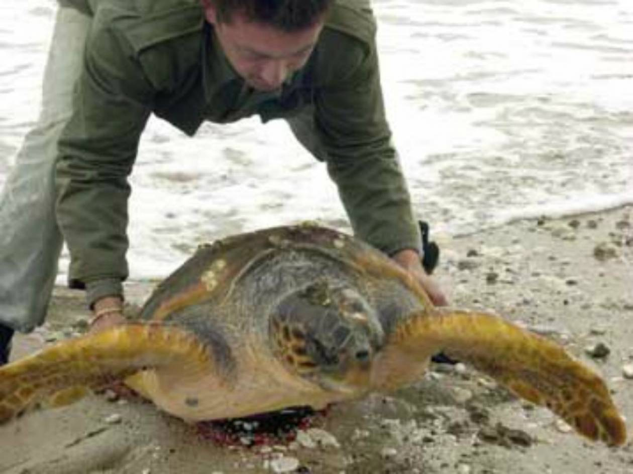 Απελευθέρωση δύο χελωνών καρέτα-καρέτα από το Ενυδρείο Κρήτης