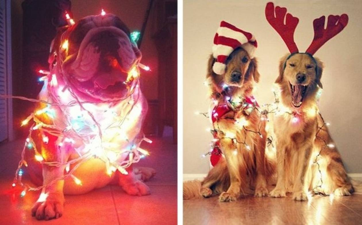 Απολαύστε τα πιο σκυλίσια χριστούγεννα!