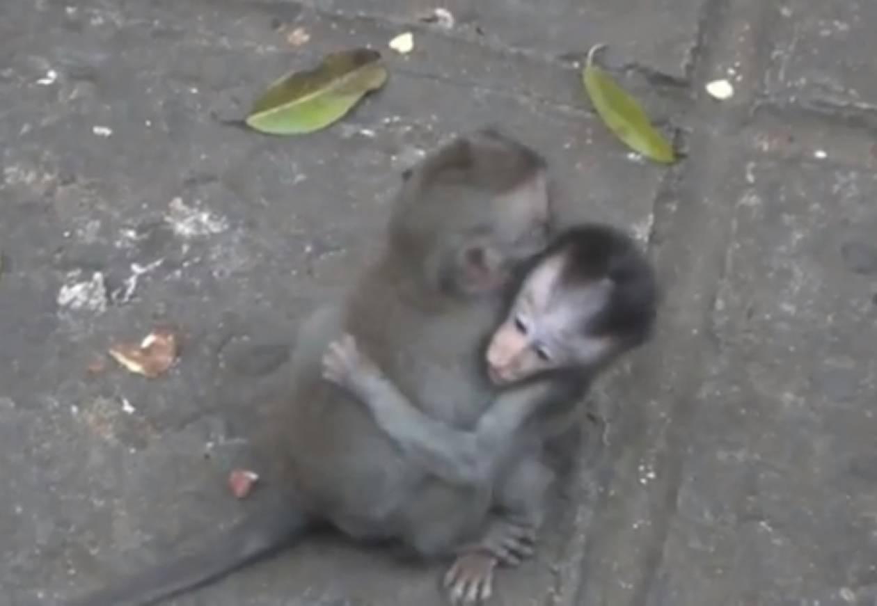 Βίντεο: Δύο μαϊμουδάκια διδάσκουν την αγάπη!