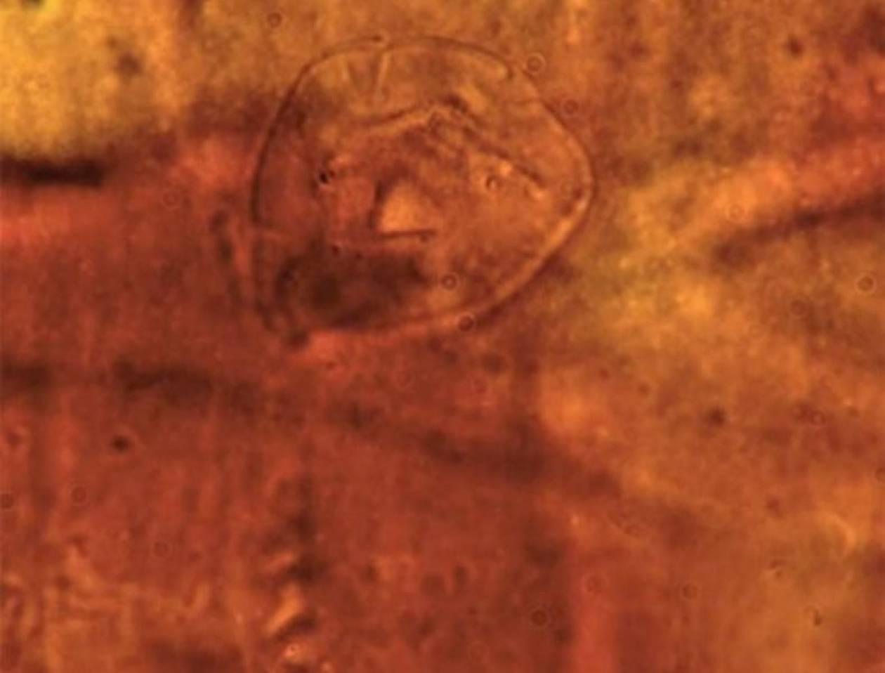 Βρέθηκε παράξενο πλάσμα ηλικίας 200 εκατ. ετών