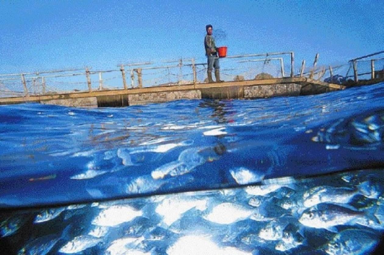 Υπογραφή δύο αποφάσεων για τις υδατοκαλλιέργειες