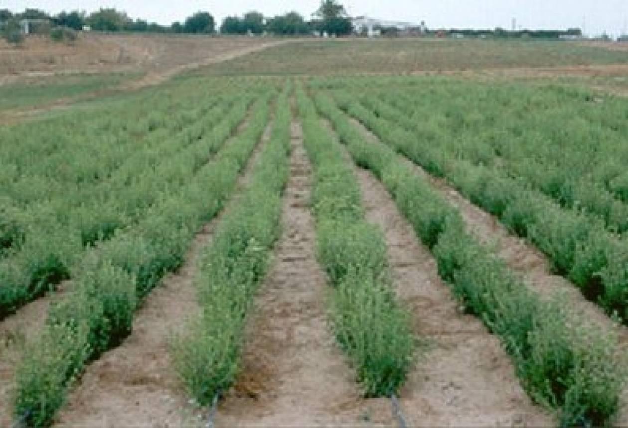 Kαρδίτσα: Οι αγρότες στον αντιπεφερειάρχη για καλλιέργεια στέβιας