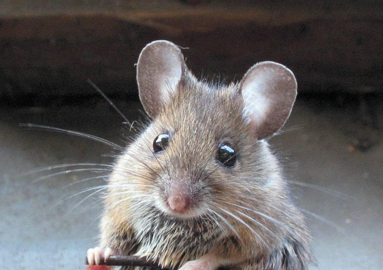 Απίστευτο! Είχαν κρύψει στο στρώμα 15 χιλ. και τα έφαγαν τα ποντίκια!