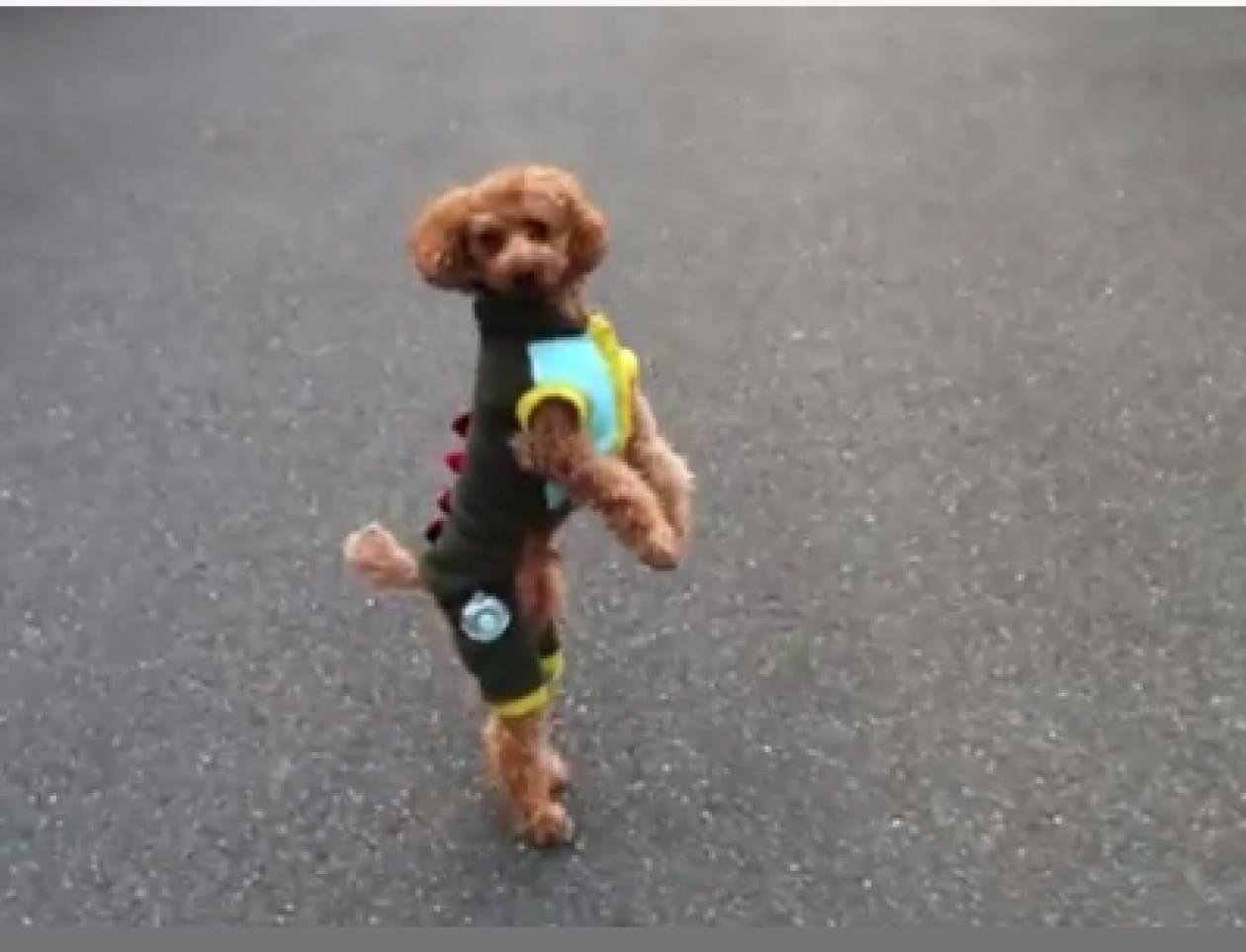 Δείτε σε τι διαφέρει από τα άλλα σκυλάκια αυτό το γλυκύτατο πούντλ!