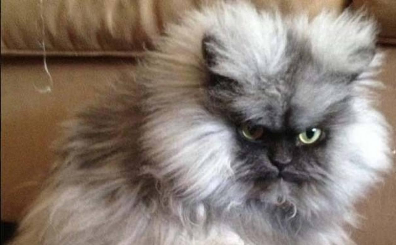 Ο πιο θυμωμένος γάτος του διαδικτύου! (βίντεο)