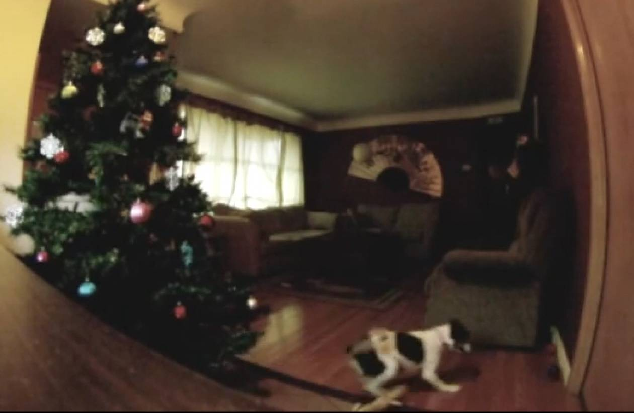 Ξεκαρδιστικό βίντεο: Μόνος στο Σπίτι...  η σκυλίσια version