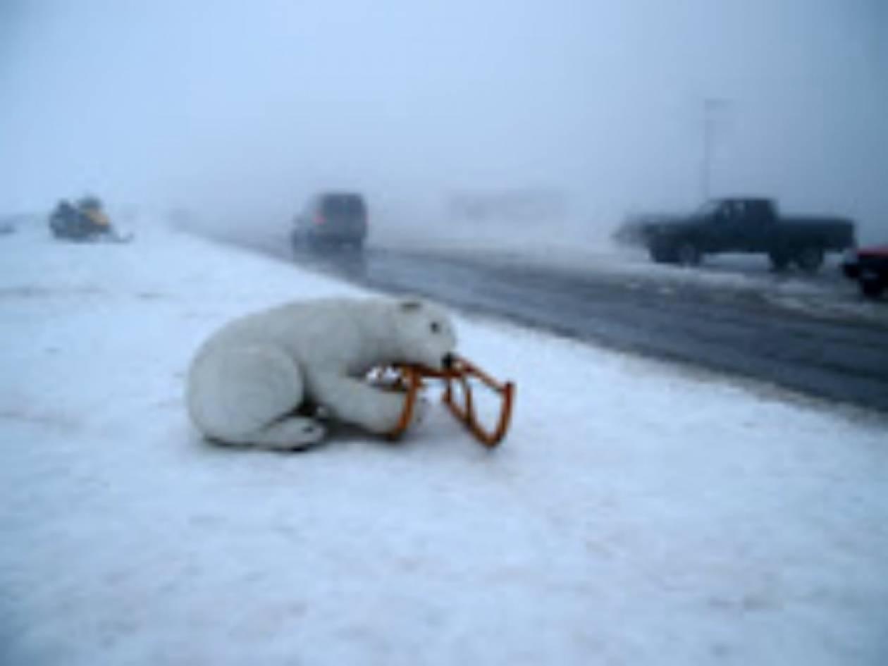 Συναγερμός στο Μέτσοβο για μια... ψεύτικη αρκούδα! (pic)