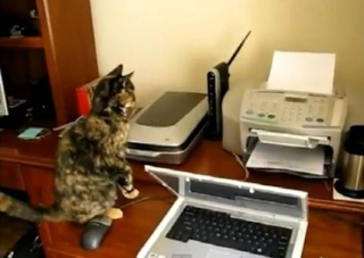 Βίντεο: Γάτες εναντίον... εκτυπωτή