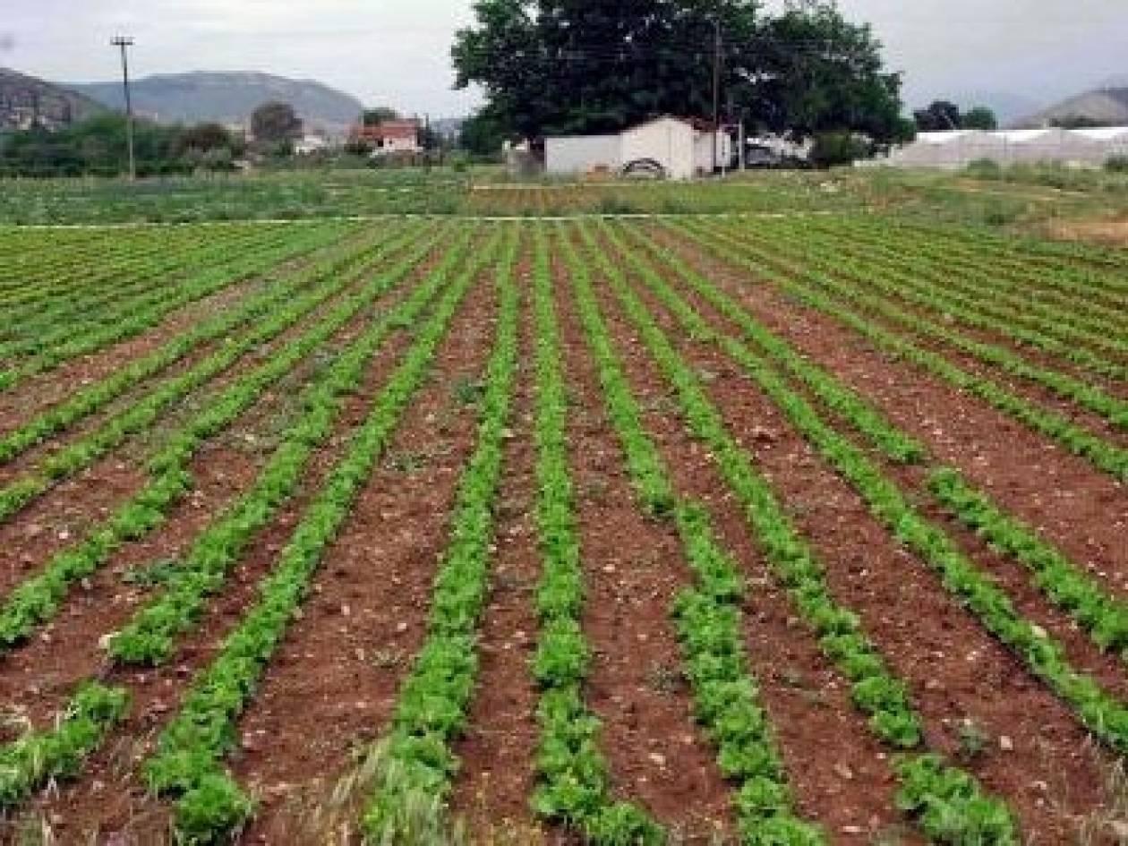 Σπάρτη: Ξεκίνησε το πρόγραμμα απασχόλησης ανέργων εργατών γης