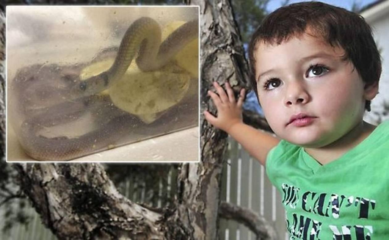 ΣΟΚ: Βρήκε στην ντουλάπα του γιου της 7 δηλητηριώδεις οχιές