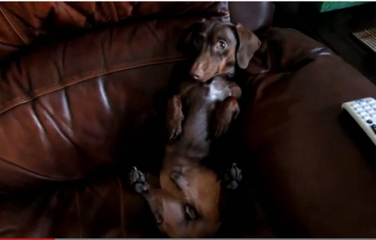 Bίντεο: Είναι σίγουρα ο βασιλιάς του καναπέ!