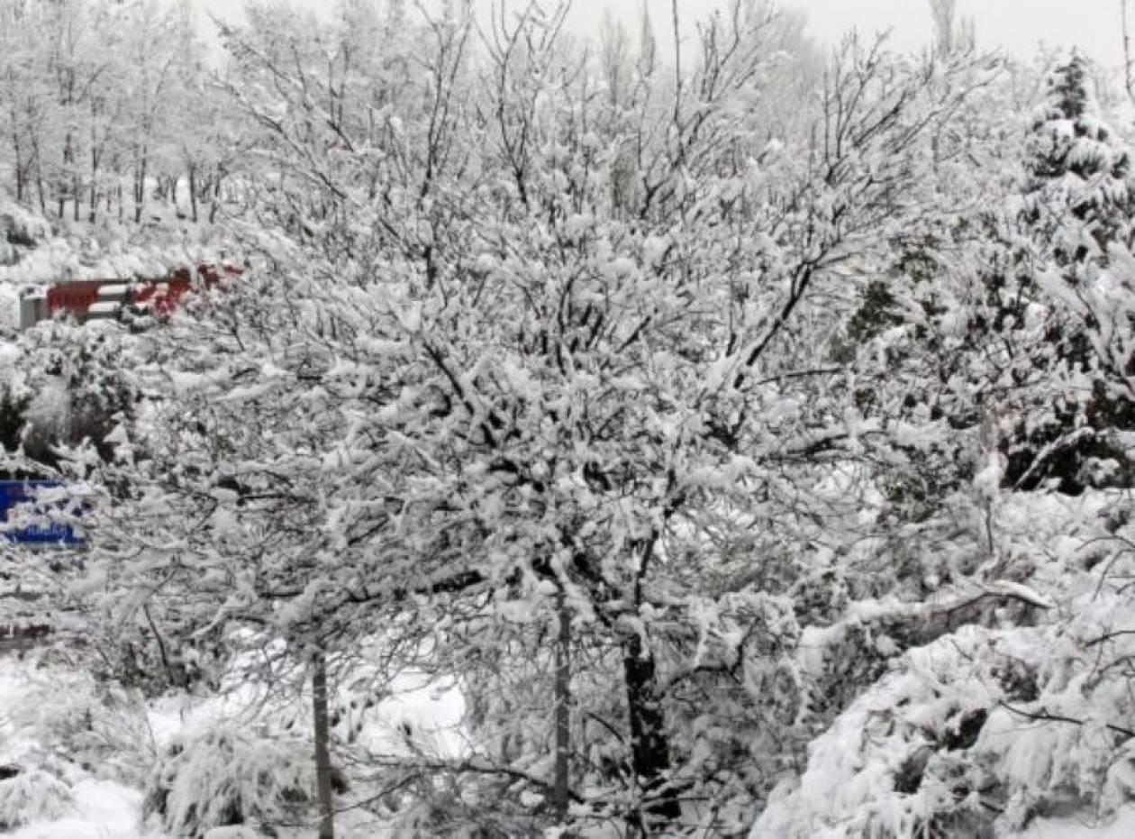 Πέθαναν από το κρύο 49 άνθρωποι