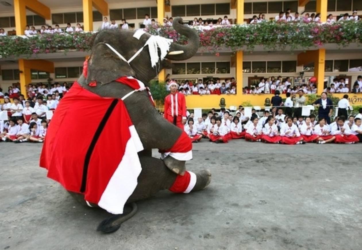 Βίντεο: Άγιος... ελέφαντας έρχεται!
