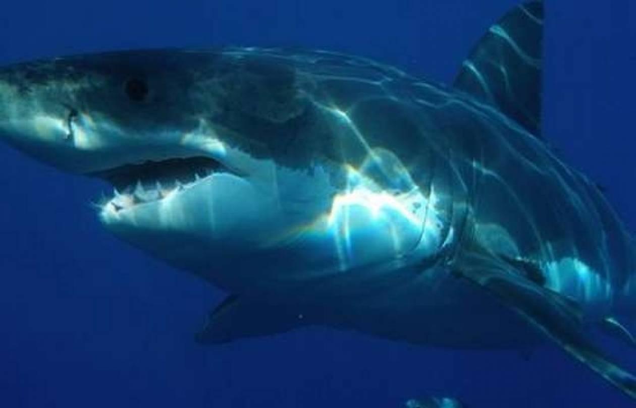 Στους καύσωνες οφείλονται οι συχνές επιθέσεις καρχαριών