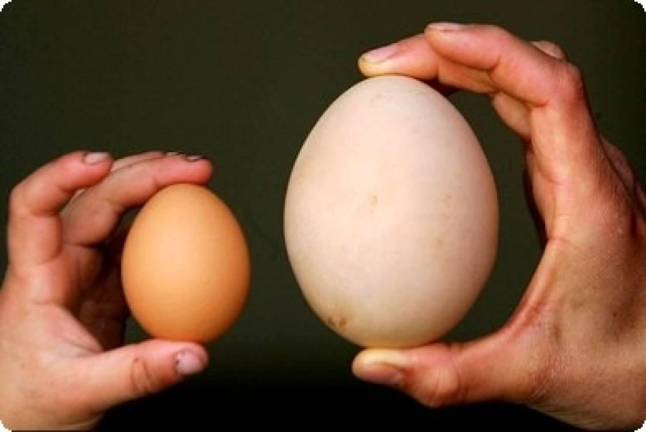 Το γιγάντιο αυγό σκότωσε την κότα...