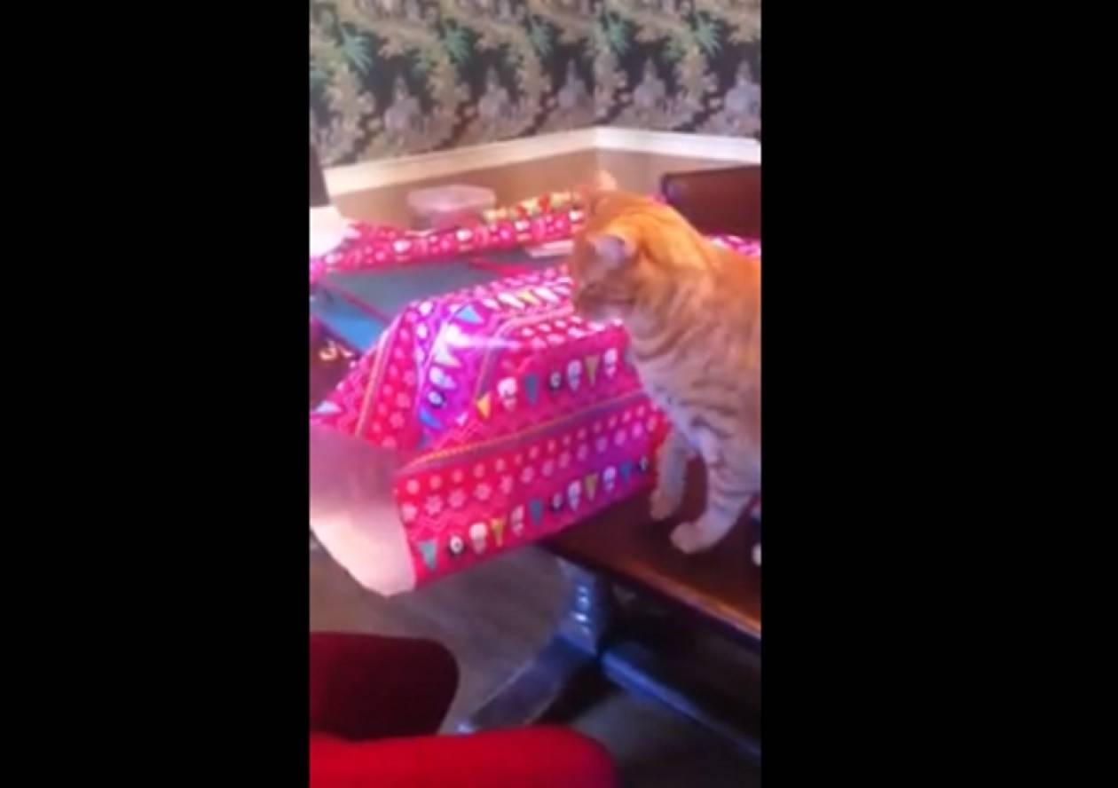Βίντεο: Δείτε τι μισεί αυτή η γάτα!