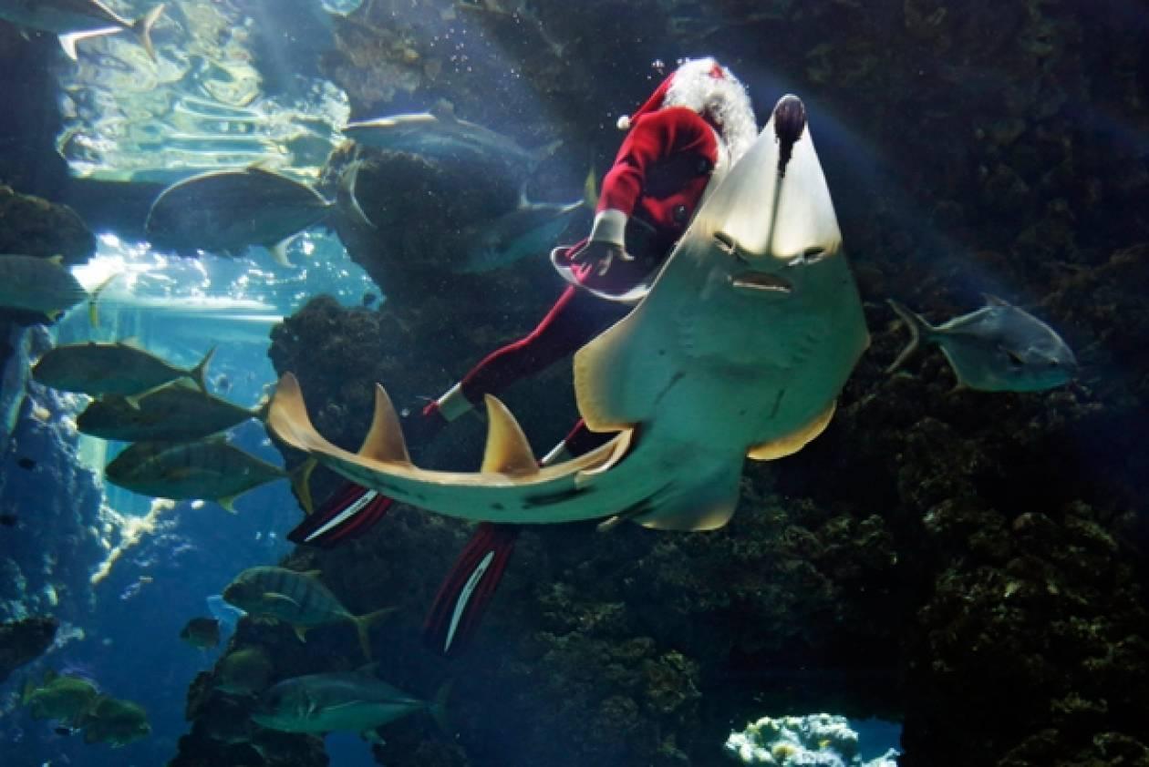 Ο Άγιος Βασίλης μέσα στο ενυδρείο (pics)