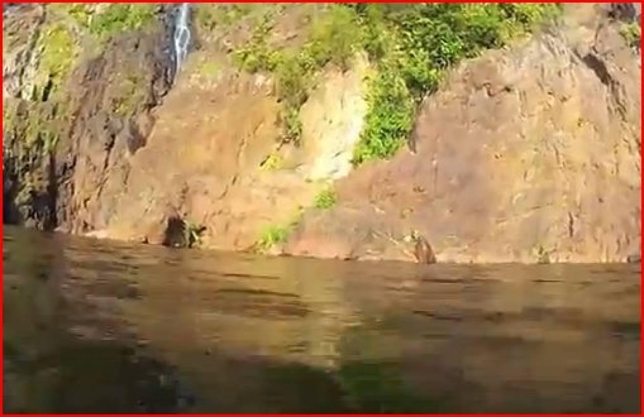 Βίντεο: Φτηνά την γλίτωσε από τον κροκόδειλο