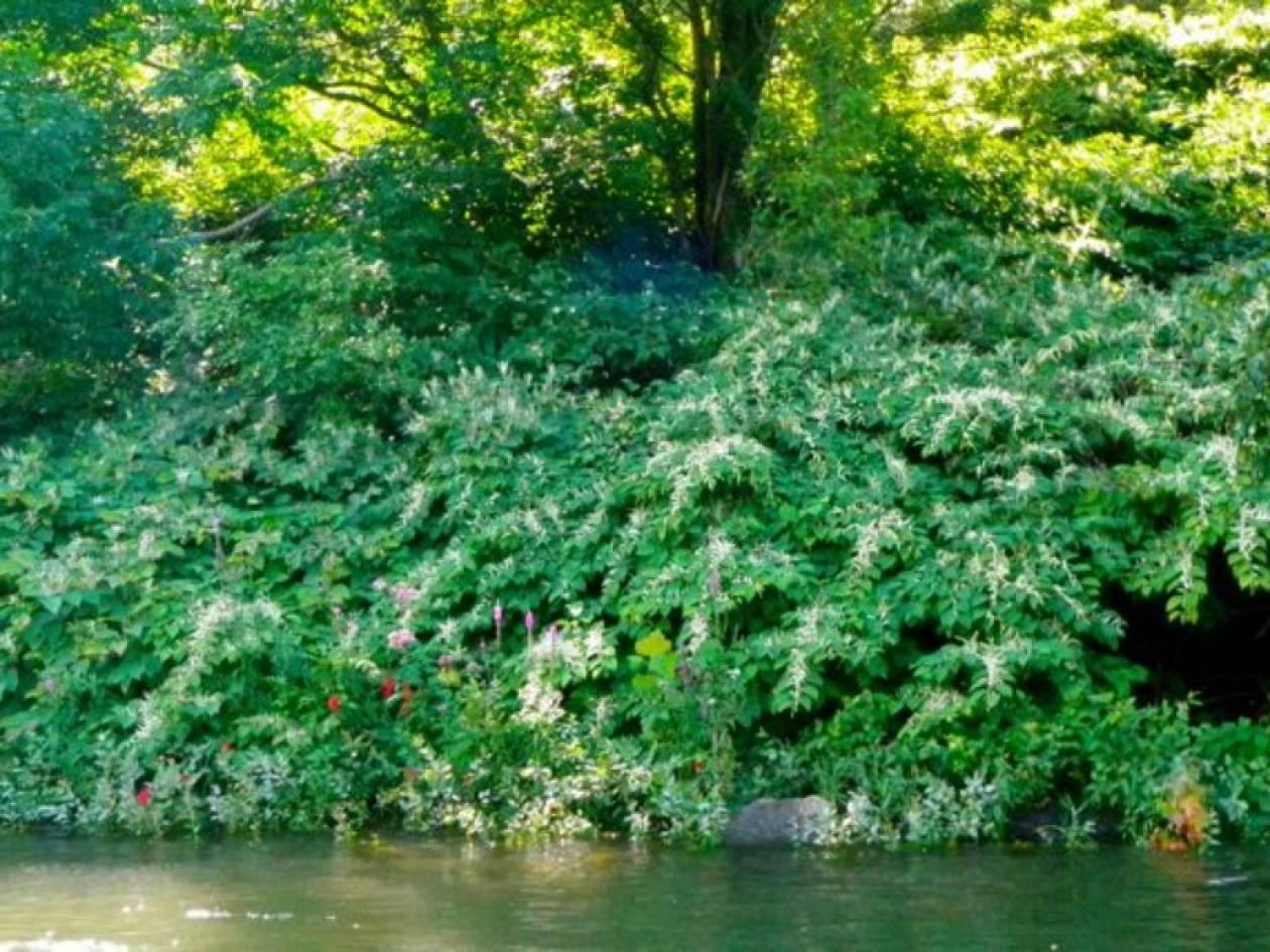 Σώοι οι μαθητές που έπεσαν σε ποτάμι