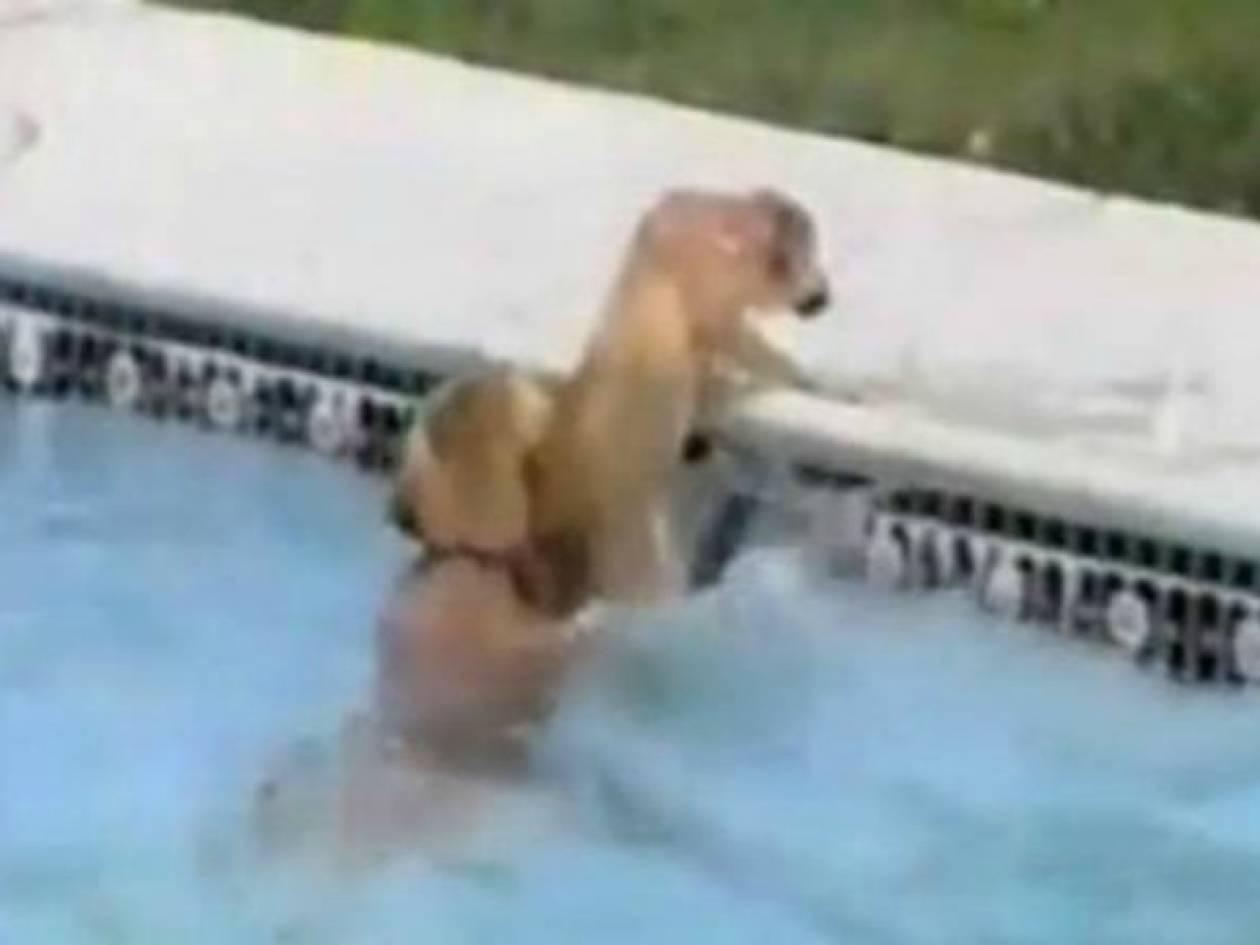Σκύλος «ναυαγοσώστης» σώζει κουτάβι από πνιγμό (video)