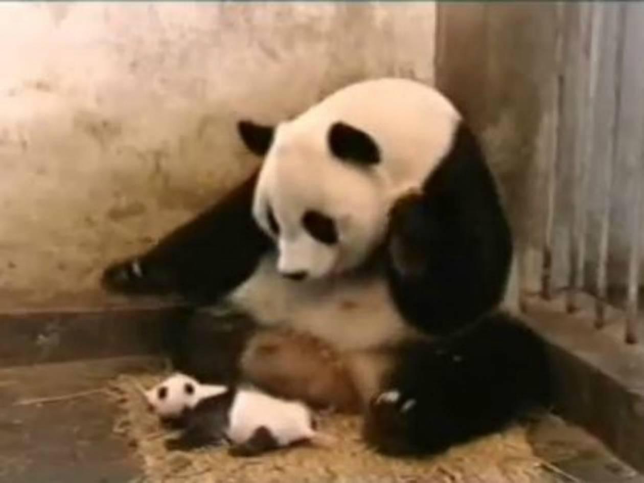 Απίθανο βίντεο: Πάντα φτερνίζεται και κατατρομάζει τη μαμά του