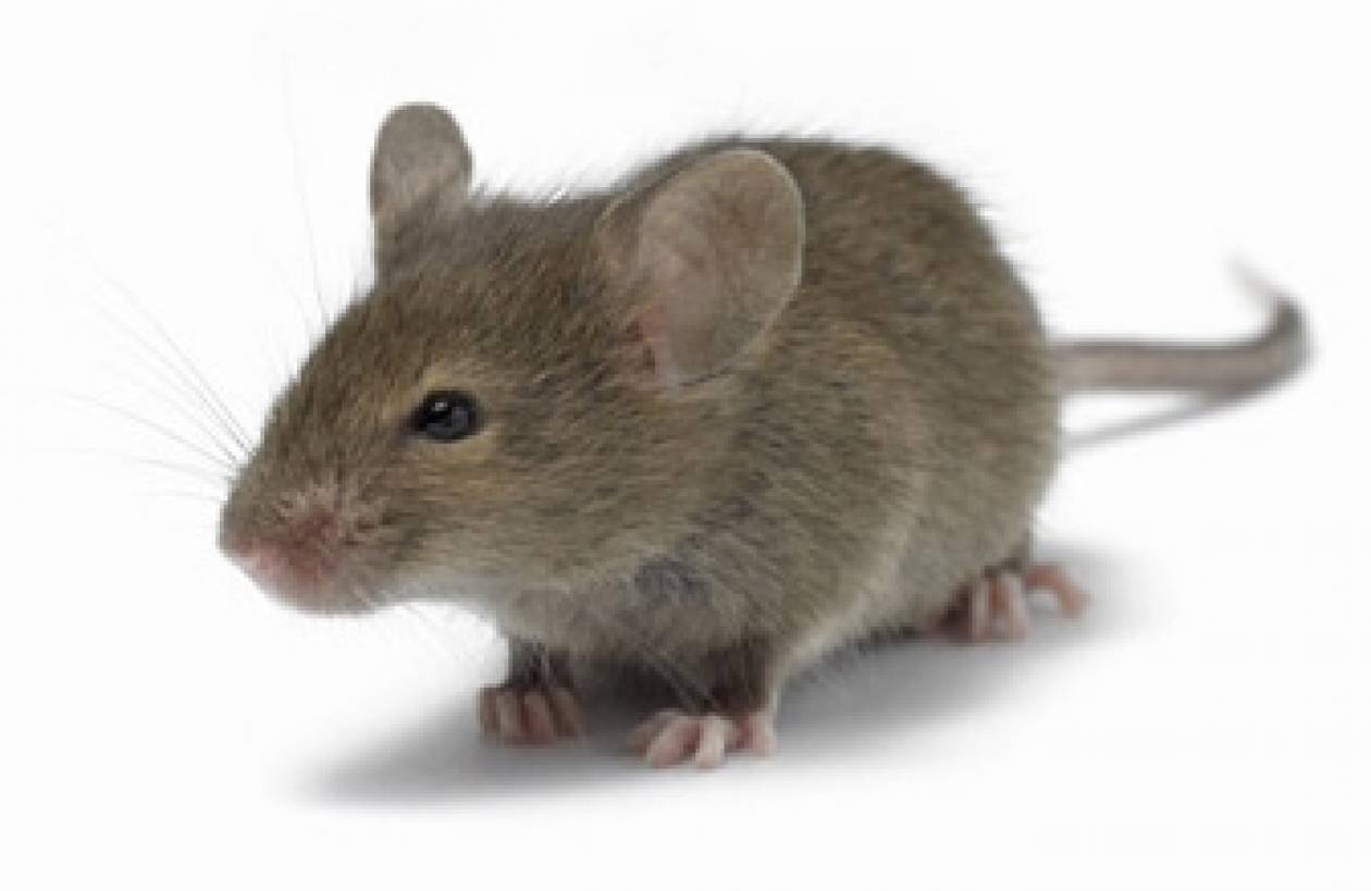 Ποντίκι μπήκε σε ταμειακή μηχανή και... έφαγε λεφτά