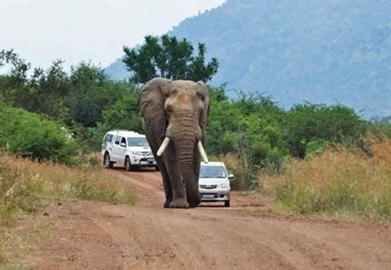 Κοπάδια ελεφάντων πλημμύρισαν τους δρόμους