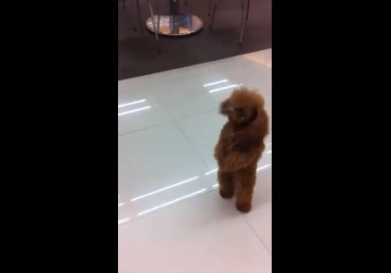Aπίστευτο βίντεο: Πουντλ πηγαίνει  για ψώνια!