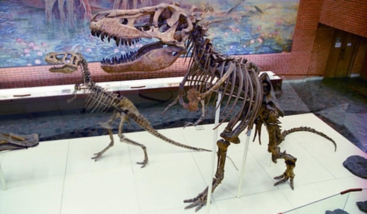 ΣΟΚ! Έκανε λαθρεμπόριο σκελετών δεινοσαύρων