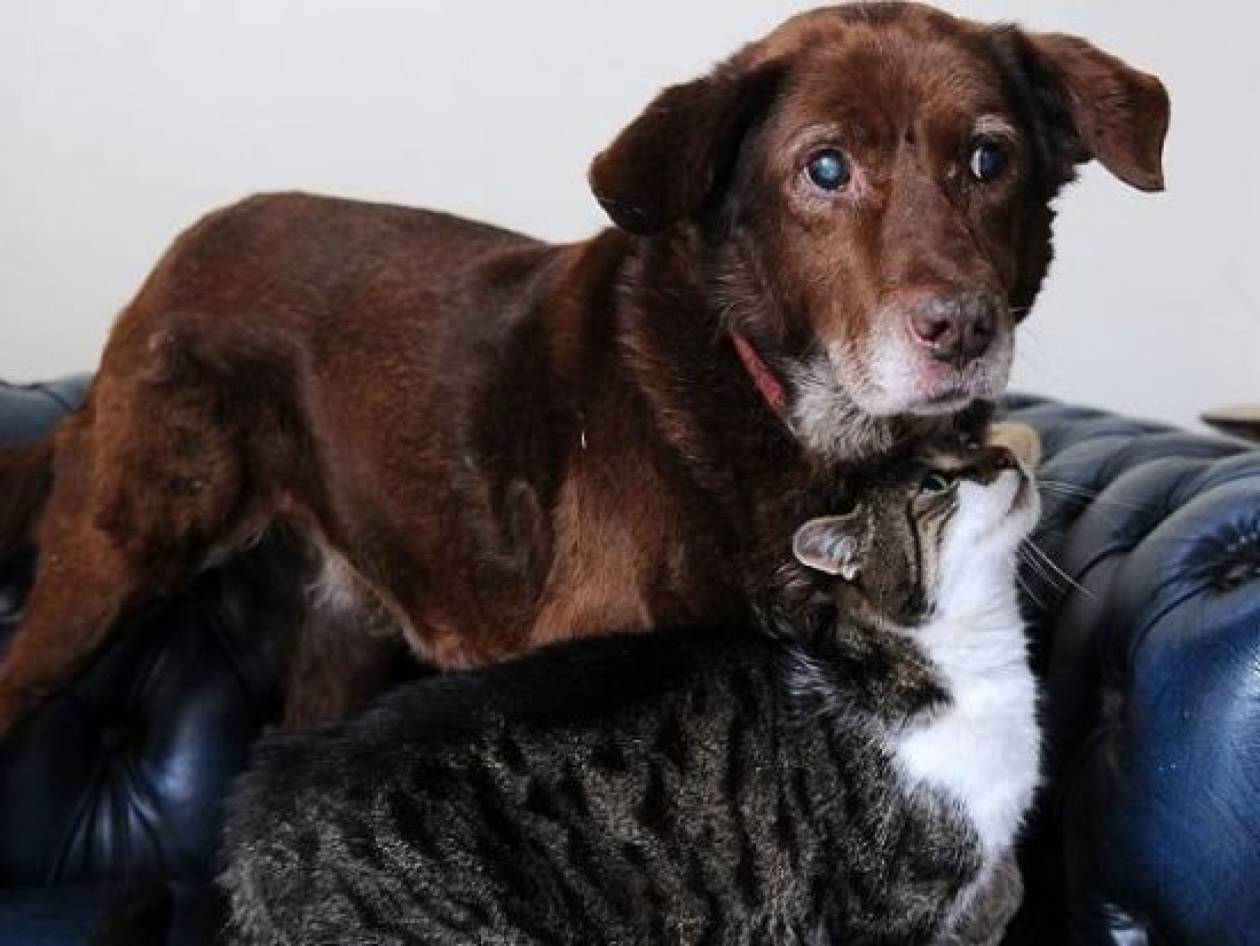 Τυφλός σκύλος έχει για... οδηγό μία γάτα