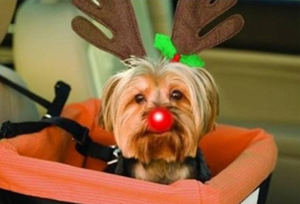Δείτε σκυλάκια να  φορούν τα γιορτινά τους!(pics)
