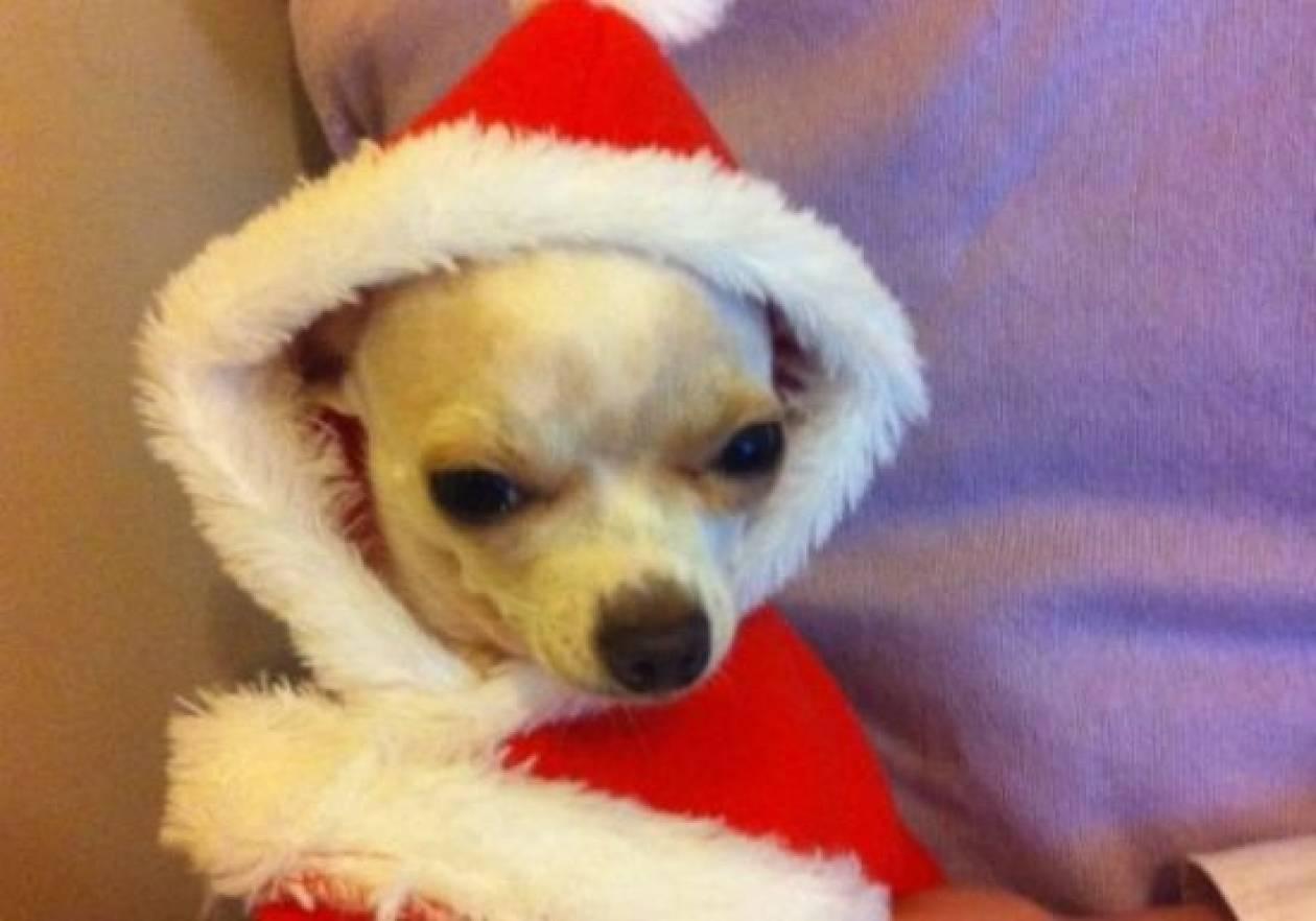Δείτε το... Χριστουγεννιάτικο σκυλάκι της Τζούλιας!