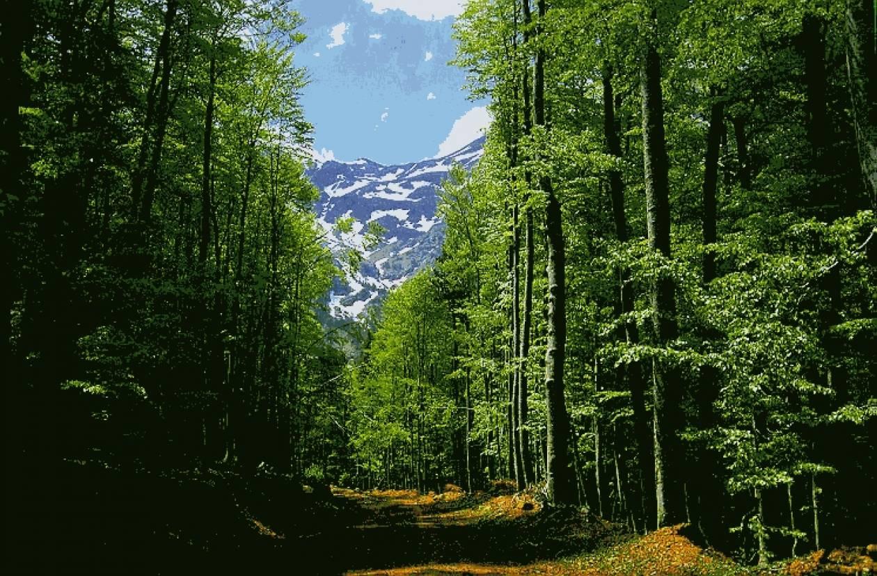 'Ηπειρος: Πρόταση για συμμετοχή των κατοίκων στη φύλαξη των δασών