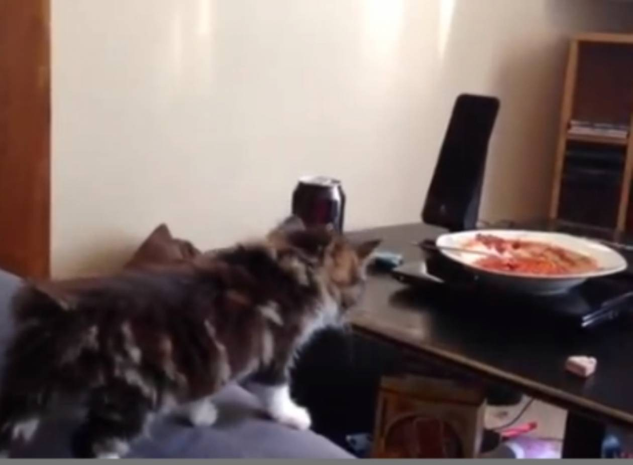 Βίντεο: Δείτε την... πεισματάρα γάτα!
