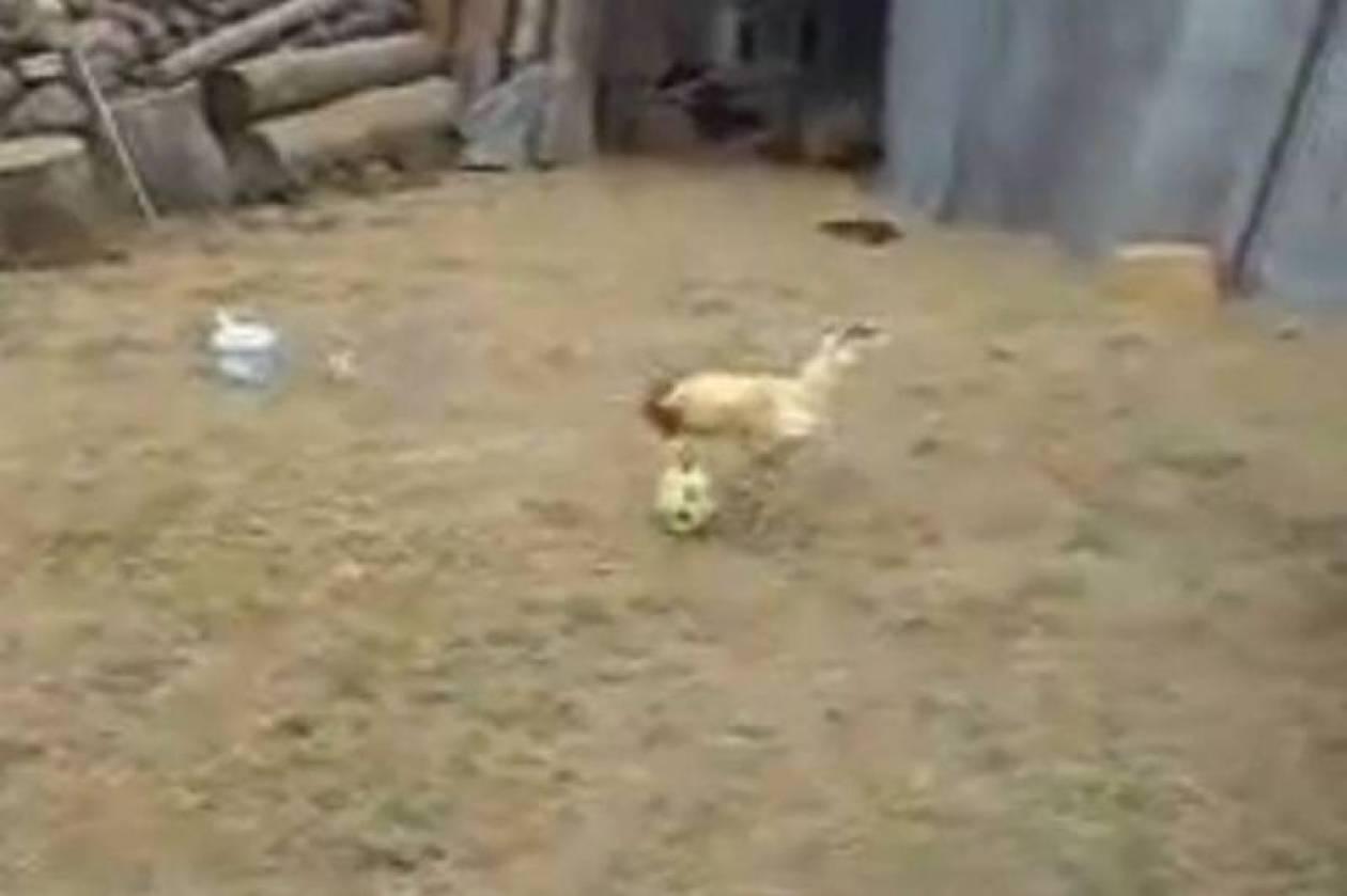 Το πουλάκι… γκολ (video)