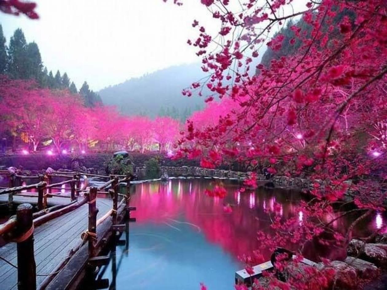 Η λίμνη με τις κερασιές!