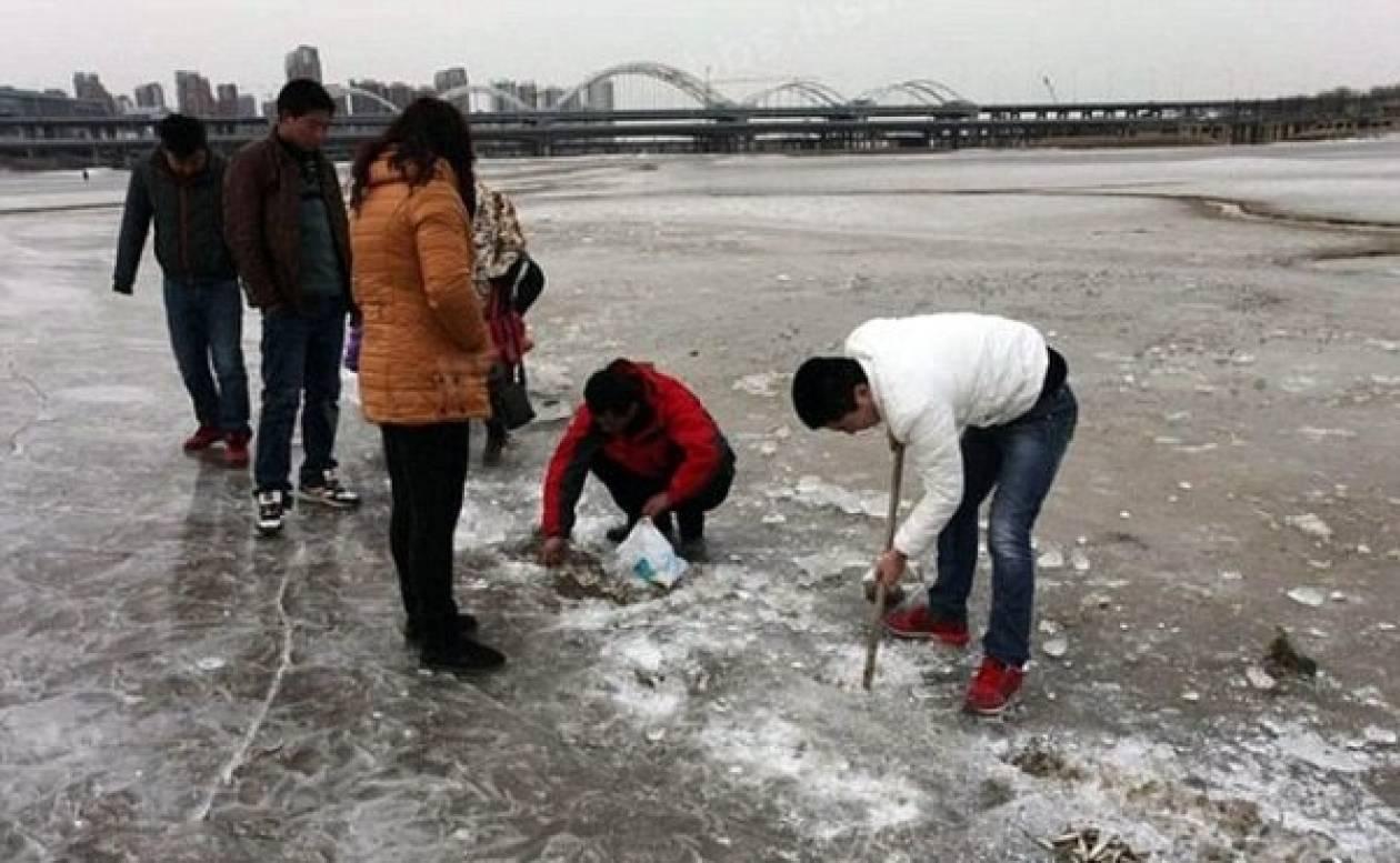 Κατεψυγμένα ή φρέσκα; Ψάρια στον πάγο! (pics)