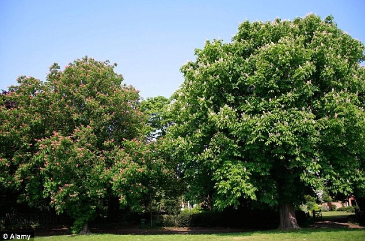 ΣΟΚ: Πέταξαν οξύ στο πρόσωπο έφηβου σε πάρκο