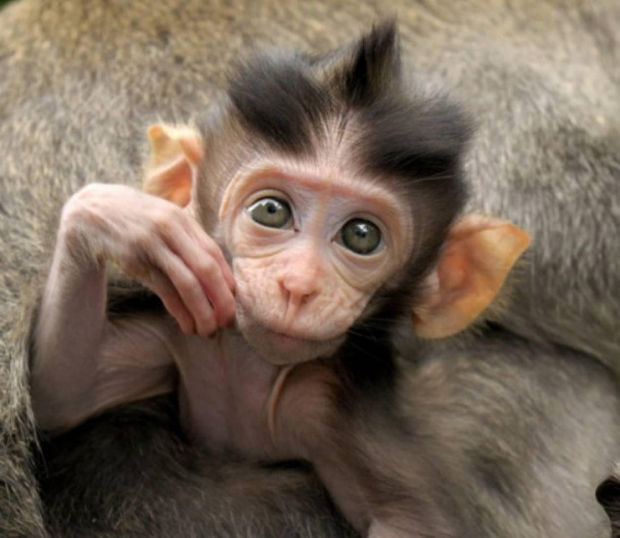Το νεογέννητο πιθηκάκι που κάνει θραύση στα social media(pics)