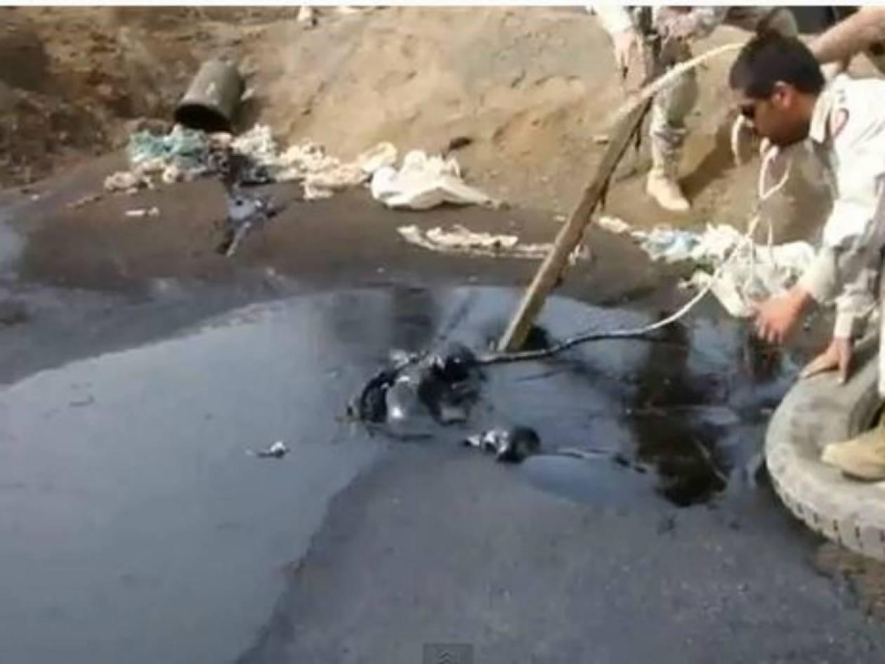 Συγκλονιστικό βίντεο: Διάσωση κουταβιών που έπεσαν σε πίσσα