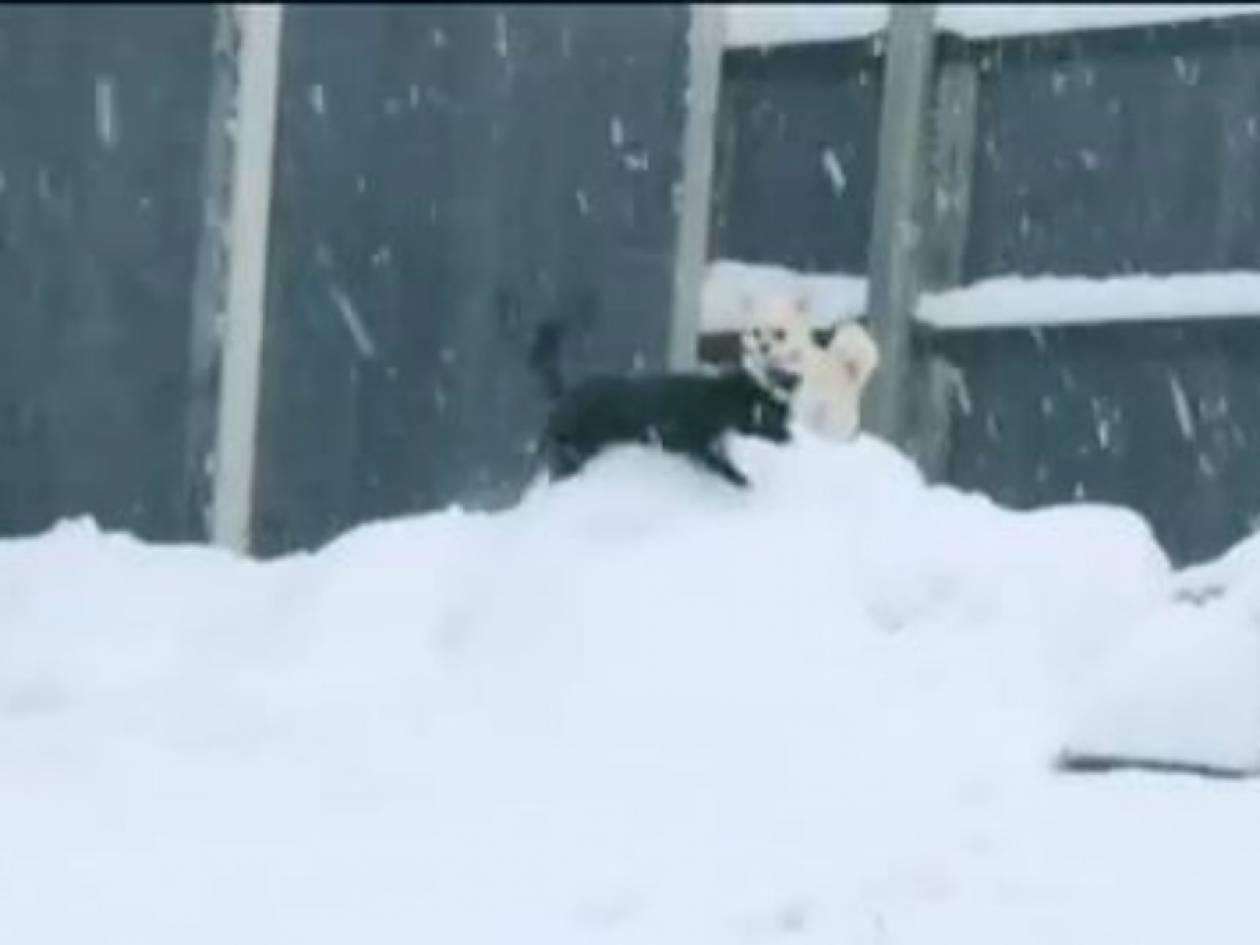 Το γλυκό βίντεο της ημέρας: Κουτάβια παίζουν στο χιόνι