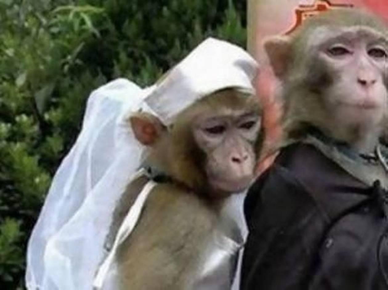 Δείτε πόση ήταν η ταρίφα για τους γάμους «μαϊμού»